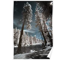 River and forest in infrared nature landscape tall trees wide angle wall art - Mondo incantato Poster