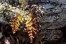 Golden Autumn Fern by MotherNature