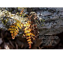 Golden Autumn Fern Photographic Print