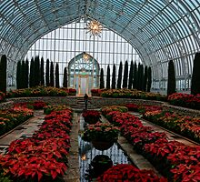 Poinsettias In The Sunken Garden by Tina Hailey