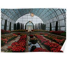 Poinsettias In The Sunken Garden Poster