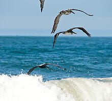 Ocean color pelicans on the Pacific blue teal waves naturalistic wildlife wall art - Squadriglia by visionitaliane