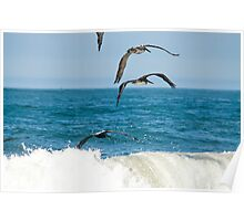 Ocean color pelicans on the Pacific blue teal waves naturalistic wildlife wall art - Squadriglia Poster