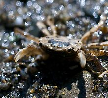 Crab close up macro photography crustacean tide pool wildlife photography color wall art fine art - Ehy tu by visionitaliane