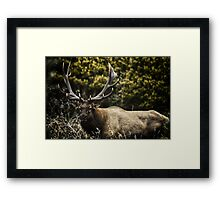Male Elk in the wild animal naturalistic - Memoria di un Re Framed Print