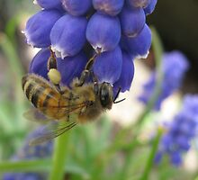 Busy Little Bee by chris-m