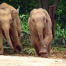 Young elephants running by JenniferLouise