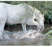 Splashing horse Photographic Print