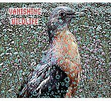 Passenger Pigeon Photographic Print