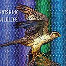 Peregrine Falcon #2 by Dick  Iacovello