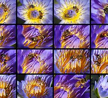 Bees at work in Water Lillies Collage by Gotcha29