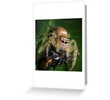 Jumping Spider #3 Greeting Card
