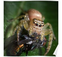 Jumping Spider #3 Poster