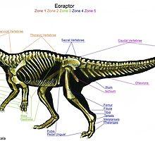 Eoraptor Skeleton Study by Thedragonofdoom