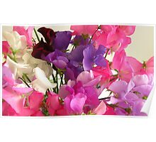 Sweet Pea Flowers Poster