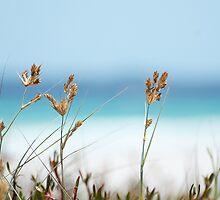 Dune Grass by shuttersuze75