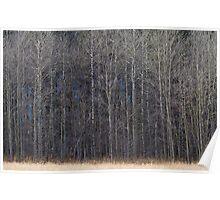 Barren Winter Forest Poster