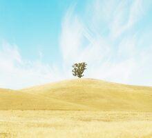 Summer Dream by Linda Lees