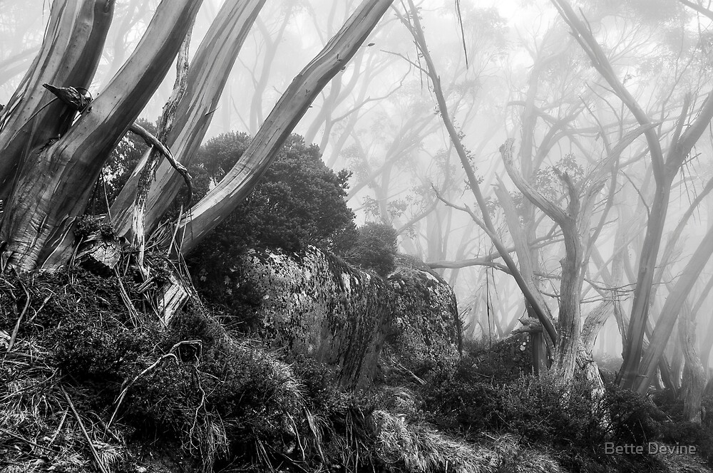 Snow Gums in B&W by Bette Devine