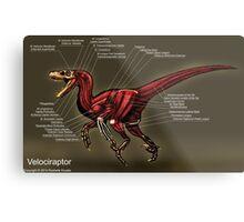 Velociraptor Muscle Study Metal Print