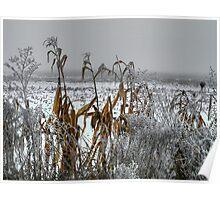 Corn - Snow - Ice Poster