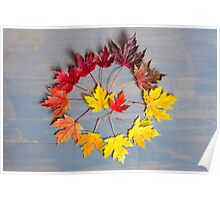 Maple leaf colourwheel Poster