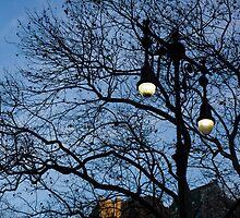Glimpses of New York City - Skyscrapers Through the Tree Branches by Georgia Mizuleva