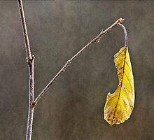 Leaf in late autumn by MichaelBachman