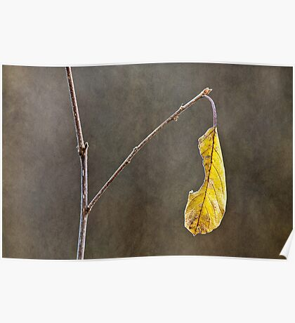 Leaf in late autumn Poster