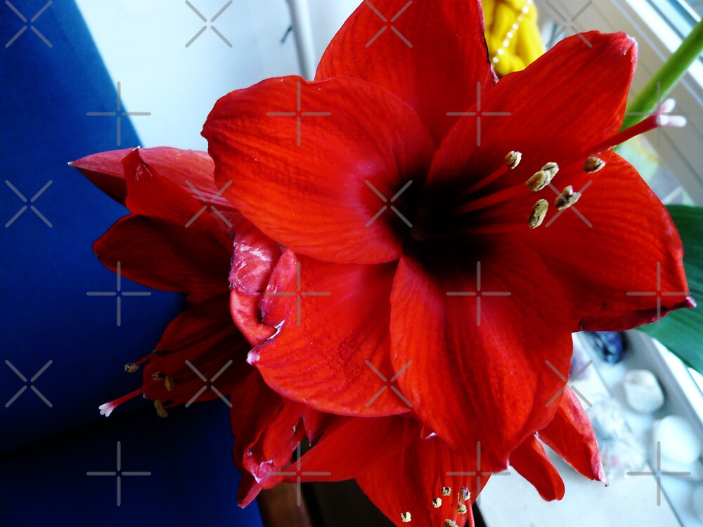 Red Amaryllis with Blue and Yellow by HeklaHekla