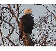 Majestic Eagle Photographic Print