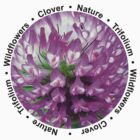 Clover - Trifolium by Evelyn Laeschke
