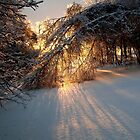 Sunset Through Ice and Snow by Kathleen Daley