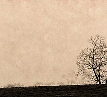 Panorama of trees in fog by MichaelBachman