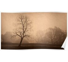 Trees in silhouette and fog Poster