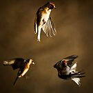 Goldfinch Trio. by igotmeacanon