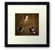 Goldfinch Trio. Framed Print