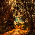 Country Lane by Robyn Carter