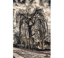 HDR grunge tree Photographic Print