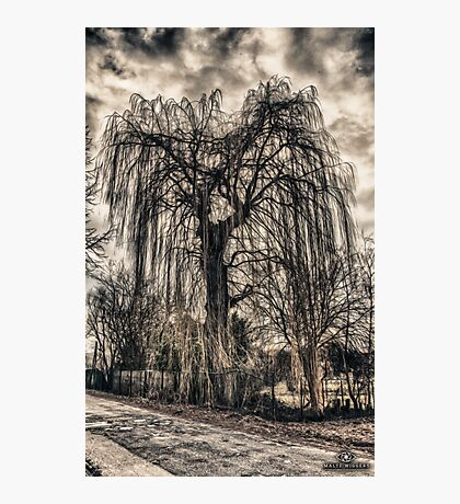 HDR grunge tree Photographic Print