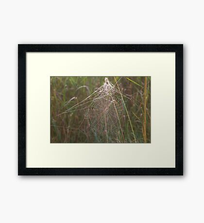 Foggy Web Framed Print