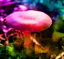 Trippy Nature - Colorful Mushroom  by Denis Marsili - DDTK
