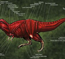 Tyrannosaurus Rex Muscle Study by Thedragonofdoom