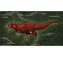 Tyrannosaurus Rex Muscle Study Photographic Print