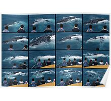 Whale watching Humans Poster