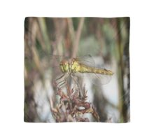 Brown Dragonfly On Husks With Garden Background Scarf