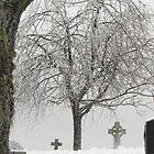 Beneath The Frozen Tree by Martha Medford