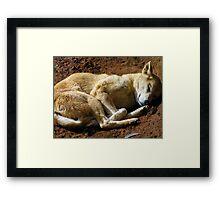 Dingo dog Framed Print