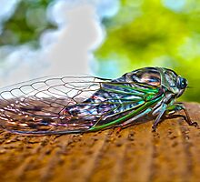 Cicada Waiting by Danielzuber