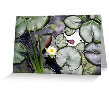 Lilly Pads Greeting Card